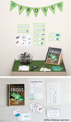 Frog Life Cycle Mini Unit | Explore the different stages of the life cycle of a frog | Includes real photographs, printables, activities, play ideas and more | Frogspawn, tadpole, froglet, frog | Writing and number activities for preschool. Kindergarten, Prep and Foundation | Australian curriculum |
