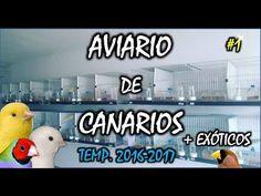 AVIARIO DE CANARIOS | AVIARIOJP 2017 |