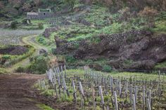 Passopisciaro Winery, Etna, Sicily: Current Releases