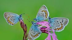 Butterflies in the Park of Castelli Romani, Italy (© Solent News/Splash News/Corbis)