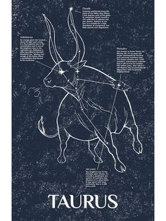 This depiction of the constellation Taurus is part of Inked and Screened's series of Celestial Bodies. These hand drawn designs encompass a wide range of astronomical phenomena within our visible star Bull Tattoos, Taurus Tattoos, Zodiac Sign Tattoos, Star Constellation Tattoo, Zodiac Constellations, Zodiac Art, Zodiac Signs, Astrology Taurus, Taurus Taurus