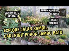 Explore Jalan Dari Arah Ledeng Ke Jl. Sersan Bajuri, Sambil Cari Bibit Jambu Batu di Lembang Bandung - YouTube Youtube, Plants, Plant, Youtubers, Planting, Planets