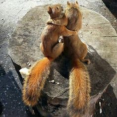 You said we were two squirrels