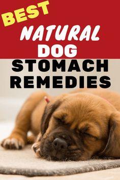 Best dog stomach remedies diarrhea