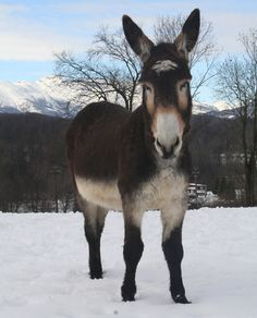 PIPPO IN THE SNOW. This image is published by The Donkey Sanctuary, under the terms of a Creative Commons Licence.                 www.thedonkeysanctuary.org.uk