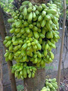 Bulimbu - fruit