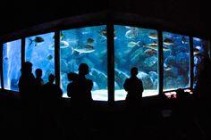Virginia Aquarium -Virginia Beach, VA
