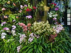 The single most important variable when growing orchids indoors is light. Orchids that prefer high light -- unobstructed sunlight...