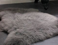 gray sheepskin rug. soft shaggy texture.