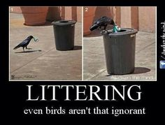 Have you laughed today? Enjoy the meme 'good guy crow' uploaded by smotheredmonkey. Memedroid: the best site to see, rate and share funny memes! Animal Memes, Funny Animals, Cute Animals, Animals Amazing, Animal Funnies, Interesting Animals, Funny Pets, Interesting Photos, Animal Pics