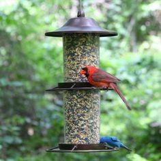 Bird Feeder Station