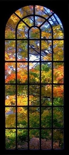 A window view of Beautiful Autumn Autumn Trees, Autumn Leaves, Autumn Art, Light Luz, Foto Nature, Seasons Of The Year, Window View, Through The Window, Belle Photo