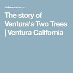 by Ken McAlpine They are lovely, the two trees in the gloaming. On this feels-like-summer evening, the sun is setting. The world is soft pastels. Ventura California, Two Trees, Pictures, Photos, Grimm