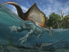 Spinosaurus's powerful, long-boned feet with long, flat claws were probably used for paddling. Its flexible tail could have been used for swimming like in a crocodile.