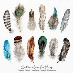 Items similar to Watercolor Feathers Clipart - Watercolour Feathers, Hand Painted Feathers, Feather Clipart, Clipart Feathers, Tribal Clipart on Etsy Feather Clip Art, Feather Drawing, Tribal Feather, Watercolor Feather, Feather Crafts, Feather Painting, Watercolor Walls, Feather Design, Watercolor Paintings