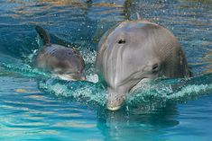 Dolphin & baby