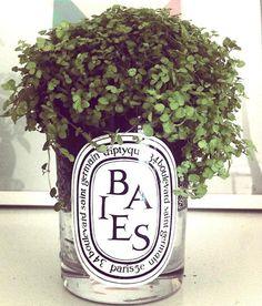 Nav K Brar: Diptyque Heaven, uses for empty candle jars