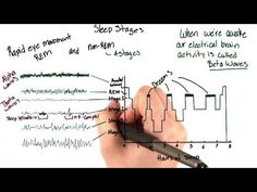 Brain waves during sleep - Intro to Psychology Intro To Psychology, Brain Waves, Theta, Online Courses, Sleep, Memes, Youtube, Meme, Youtubers