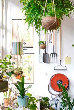 Amsterdam West: Wildernis plants Store Amsterdam Guide