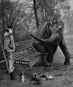 Alfred Hockley, a painter, returns from his lunch break to find an elephant named Dumbo seated on his freshly painted bench, London Zoo, 1956.