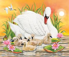 Mother Swan At Sunset by Rosiland Solomon