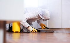 Pest Control Company | Emblem Pest Services has been treating termites, cockroaches and rodents for approximately 18 years in Sydney's Western Suburbs including areas such as Penrith and the Blue Mountains.We offer all areas of domestic/residential and commercial pest control and to see exactly what they are, have a look under the services tab situated above. Alternatively you can talk to one of our friendly team members by calling us on 1800 244 778.
