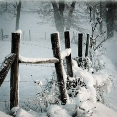 Winter | Snow covered fence | Country Lane