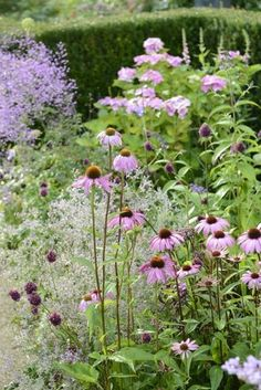 Gardeners Desire