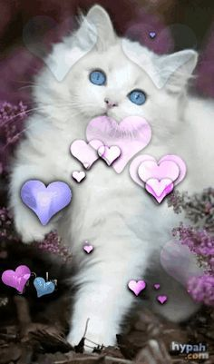 Stars Dazzle In The Mystic Night – This site is designed To Inspire, To Heal, To Motivate and To Thrive! Beautiful Kittens, Beautiful Gif, Animals And Pets, Baby Animals, Cute Animals, Cute Cats, Funny Cats, Pet Psychic, Pet Grief