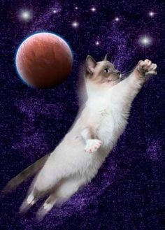 Cosmic Cats Forever!