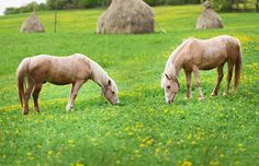 Do you dream of opening your own #horse #rescue? Before you do so, it is important to keep in mind the necessary steps involved!