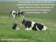 With respect to animal diet, let it be considered, that taking away the lives of animals, in order to convert them into food, does great violence to the principles of benevolence and compassion.