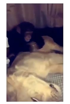 That monkey has no chill whatsoever - Funny Monkeys - Funny Monkeys meme - - Tu es courageux toi ! The post That monkey has no chill whatsoever appeared first on Gag Dad. Cute Little Animals, Cute Funny Animals, Funny Cute, Funny Monkeys, Hilarious, Funny Video Memes, Stupid Funny Memes, Funny Humor, Funny Animal Memes