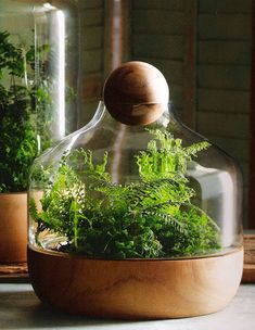terrarium  // Great Gardens & Ideas //