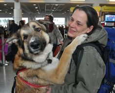 Thor, a rescued German Shepherd Dog mix, is able to smile again after surgery to reopen his mouth.