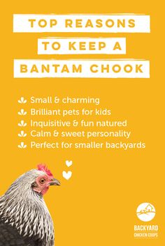 Keeping Chickens, Raising Chickens, Backyard Chicken Coops, Chickens Backyard, Animals For Kids, Farm Animals, Cochin Chickens, Bantam Chicken Breeds, Chicken Lady