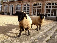 Ils nous ont rendu visite... | Le Pavillon de l'Orangerie I Maison d'hôtes I Beaune I Bourgogne Bed And Breakfast, Animals, 17th Century, Breast, Bedrooms, History, Home, Pavilion, Animales