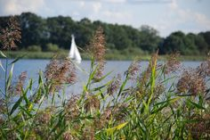 Das größte zusammenhängenden Wassersportreviers Europas: Am besten lässt sich...
