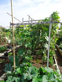 Our first community garden tour