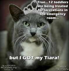 NOBODY gets between a princess and her tiara! ADOPTED!!!