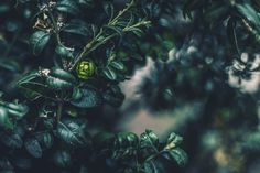 Green Nature.   Vienna, Austria by @p.kasprzycka   Patrycja Kasprzycka   Website: kasprzycka.at   #vienna #austria #spring #flowers #light #shadow #nature #green #macro #bokeh Green Nature, Vienna Austria, Bokeh, Spring Flowers, Plant Leaves, Website, Plants, Photography, Photograph