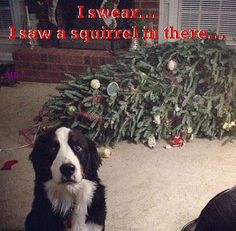 haha this is just like my border collie!                                                                                                                                                                                 Mais