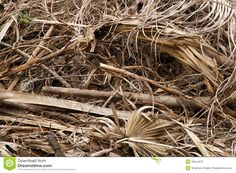 dead palm leaves - Google Search
