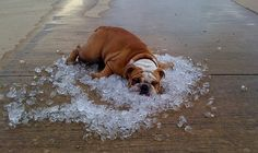 Though you are undoubtedly feeling the heat today, the Nassau County SPCA is reminding all Long Islanders that our pets are too! From exercising tips to identifying signs of dehydration and heat stroke, the article below has important information for all pet owners to consider as temperatures rise!