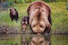 Шутки от большой медведицы