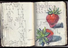 Italian Sketchbook 2011 by Anna Karmazina, via Behance Artist Journal, Artist Sketchbook, Sketchbook Pages, Art Journal Pages, Architecture Sketchbook, Sketchbook Ideas, Art Journals, Scrapbooks, Botanical Illustration