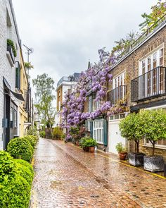 Kynance Mews is one of the prettiest streets in London. The wisteria blooming on its facades in the spring is beautiful
