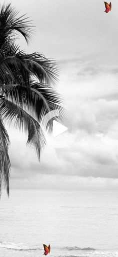 -Iphone X Wallpaper Coconut tree black and white wallpaper Hd #iphonewallpaper #iphone11<br> Black And White Wallpaper Iphone, Plain Wallpaper Iphone, Iphone Homescreen Wallpaper, Iphone Background Wallpaper, Cool Wallpapers Black And White, Iphone Wallpapers, Aztec Wallpaper, Beach Wallpaper, Dark Wallpaper