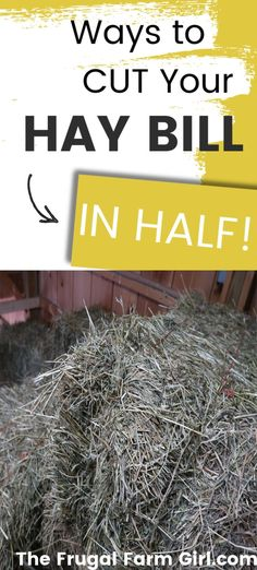 Depending on the number of animals you own your hay bill may be sending you over budget. If you are looking for new ways to try and cut your hay bill in half check out the tips below. Raising Farm Animals, Raising Goats, Saving Tips, Saving Money, Goat Shelter, Water And Sanitation, Mini Pigs, Living Off The Land, Retirement Planning