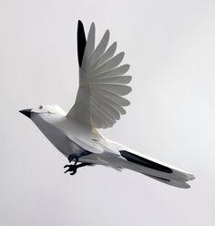 white paper finch #paper #finch #wings #flight